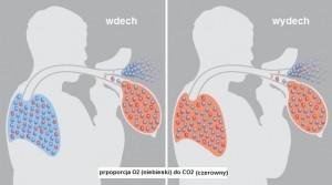 prpoporcja-CO2