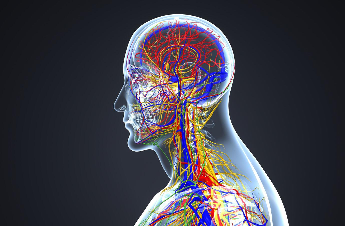 Kurs - Osteopatyczna Terapia Trzewno-Naczyniowa
